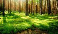 欧洲议会通过决议立法制止全球森林砍伐